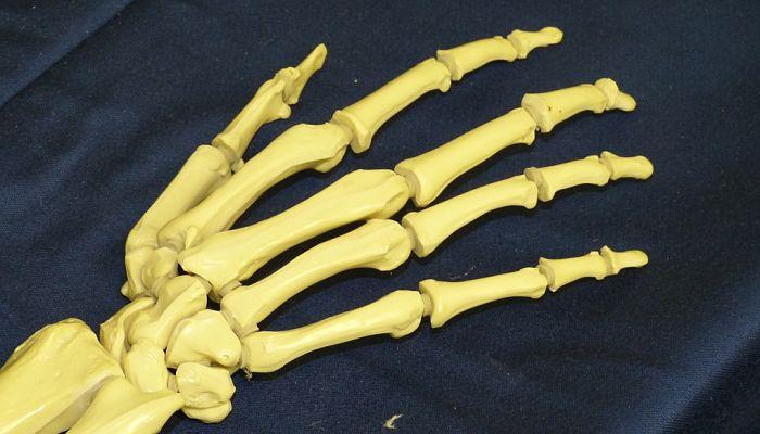 El amaranto mejora la fuerza de los huesos y también previene la osteoporosis