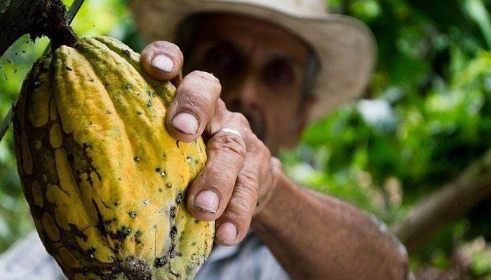El cacao puede prevenir el envejecimiento prematuro