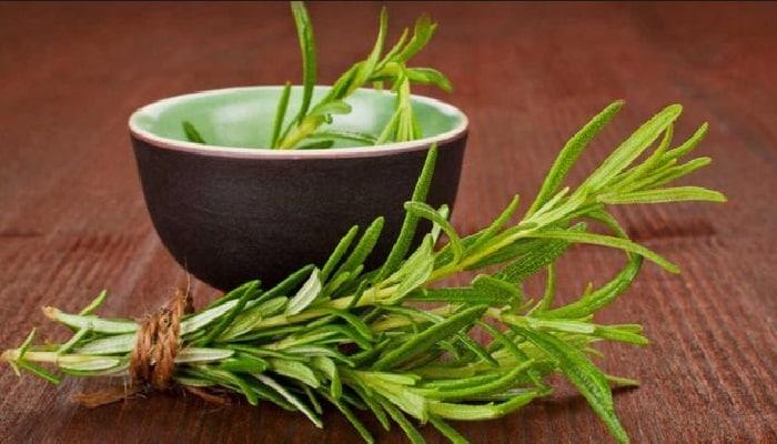 los beneficios de beber té de romero
