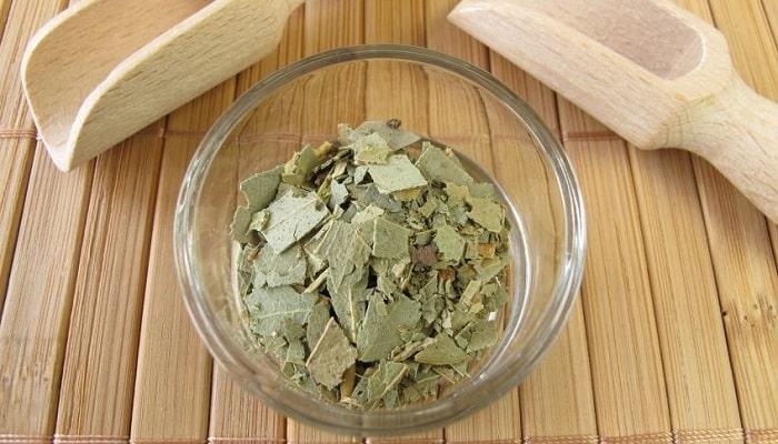 los beneficios medicinales del eucalipto