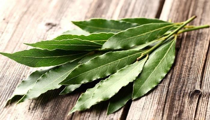 beneficios del eucalipto