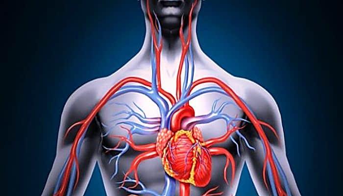 Impulsa la circulación sanguínea
