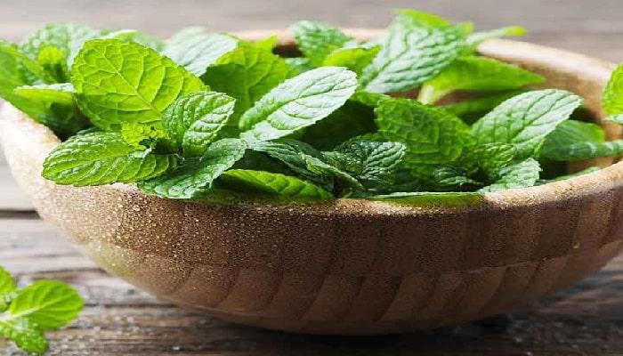 beneficios de las hojas de menta