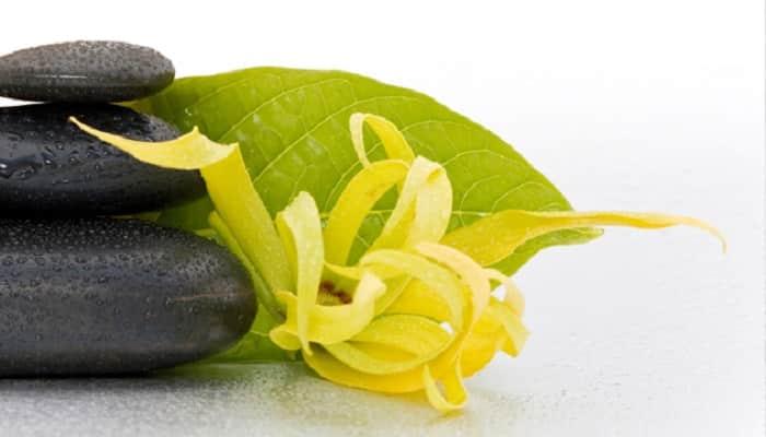 aceite de ylang ylang