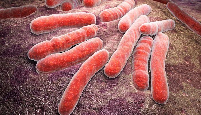 La Yaca combate las infecciones
