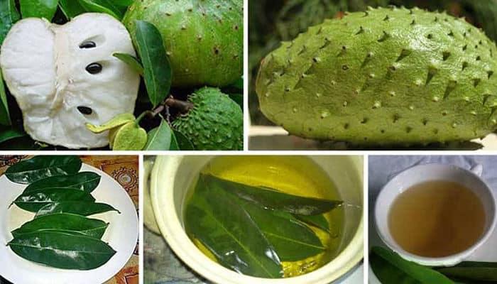 las hojas de guanabana