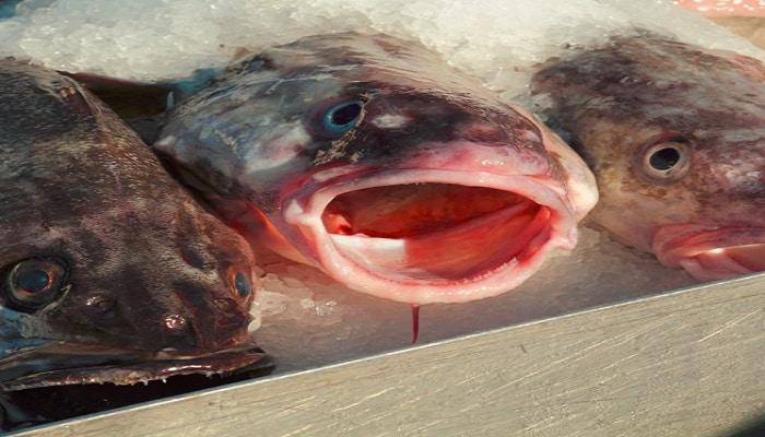 beneficios de comer pescado blanco
