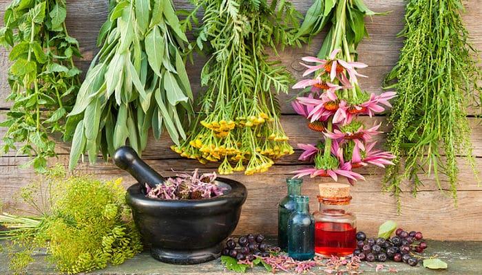 las hierbas antivirales