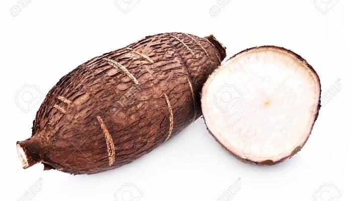 la raíz de yuca