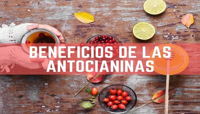 Beneficios De Las Antocianinas