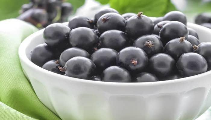 Beneficios De La Grosella Negra