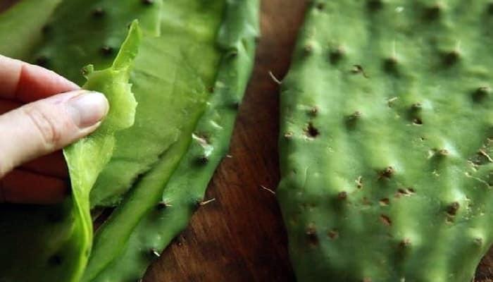 Beneficios de las hojas de cactus