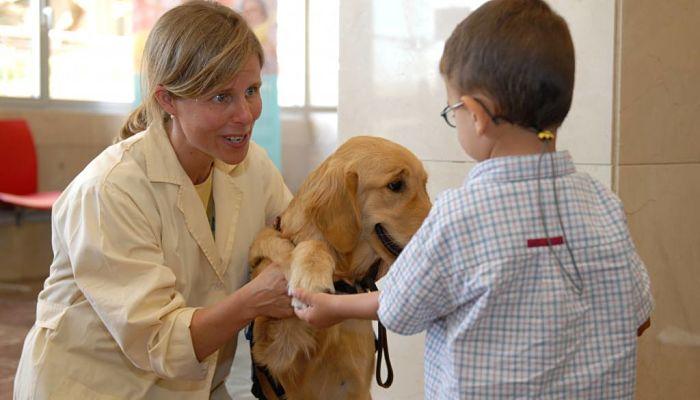 perros de terapias