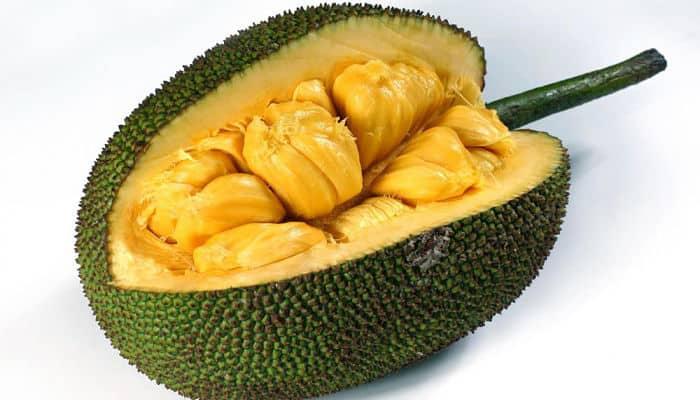 las semillas de Jackfruit.