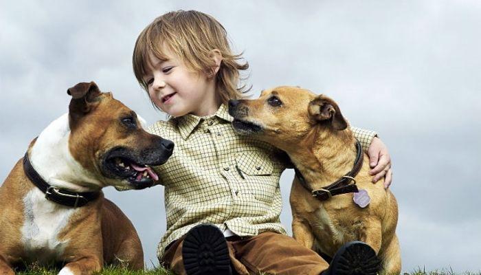mascotas para la familia
