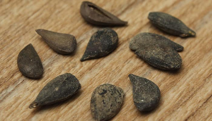 semilla de pera africana