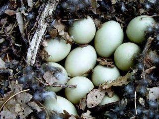 nidos de aves marinas