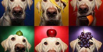 fruta para los perros