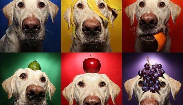 frutas para los perros