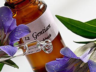 10 Beneficios Del Consumo De Flores De Bach Para La Salud