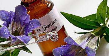Grandes beneficios de las flores de bach